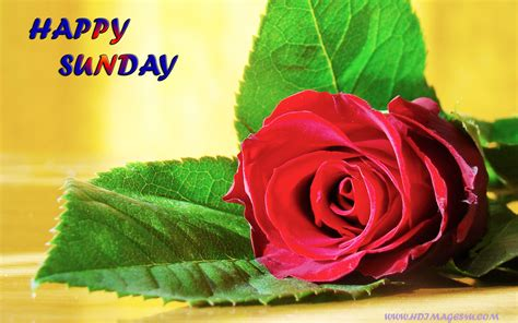 happy sunday wallpaper   gallery