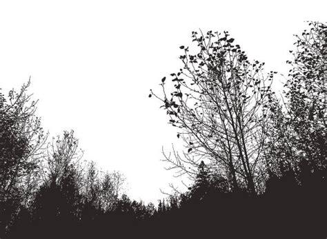 aspen forest silhouette light best aspen tree illustrations royalty free vector graphics clip istock