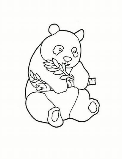 Panda Coloring Pages Bear Drawing Printable Bears