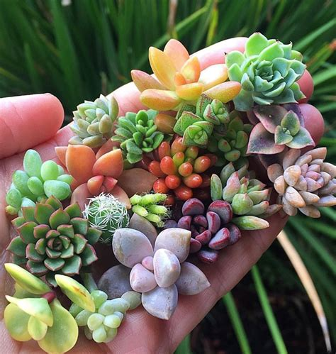 100+ Gorgeous Succulent Plants Ideas For Indoor And Outdoor Full Of Aesthetics - Page 13 of 20 ...