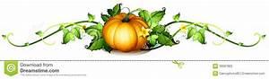 Corn Squash Plant Clipart - Clipart Suggest