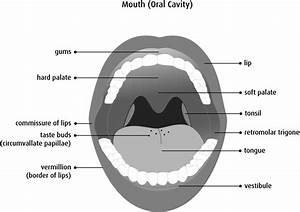 Anatomy and physiology of the oral cavity - Canadian ...