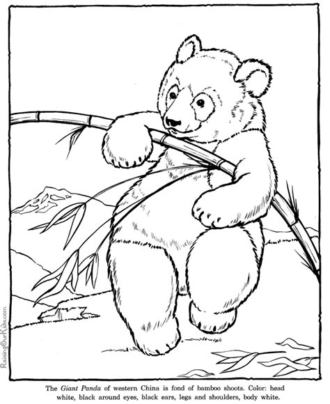 coloring  page realistic zoo animals giant panda