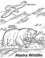 HD Wallpapers Coloring Pages Alaska Animals