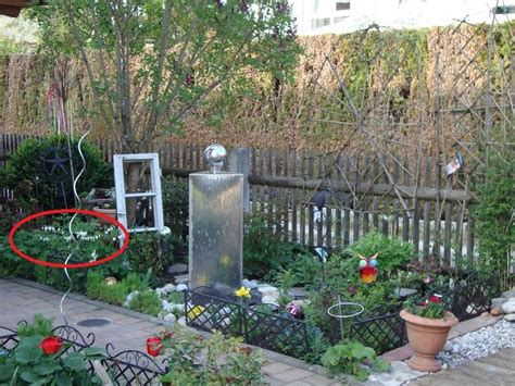 Tränendes Herz Im Kübel by Tr 228 Nendes Herz Im K 252 Bel Geht Das Mein Sch 246 Ner Garten Forum