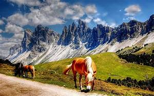 Horses, In, The, Dolomites, Mountains, Italy, South, Tyrol