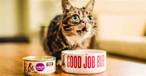 halo cat food today only free can of halo cat food you saved how much