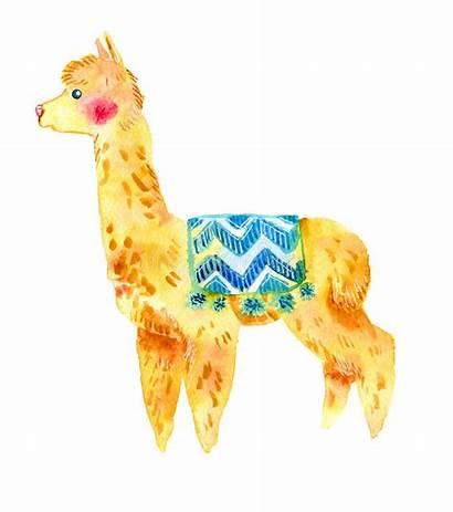 Llama Watercolor Alpaca Background Isolated Cartoon Animal