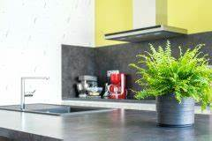 Hortensie Als Zimmerpflanze : baumfarn als zimmerpflanze pflanz und pflegetipps ~ Lizthompson.info Haus und Dekorationen