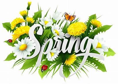 Spring Clipart Transparent Flowers Flower Season Decorative