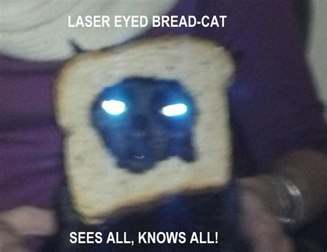 Image 243871 Cat Breading Know Your Meme