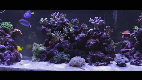 aquarium video  widescreen fish tank  full hd youtube
