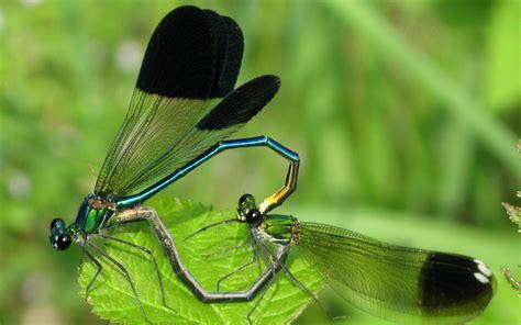 Animal Wallpaper For Home - dragonfly wallpaper for home wallpapersafari