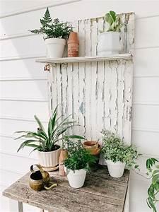 Indoor, Plants, For, Beginners