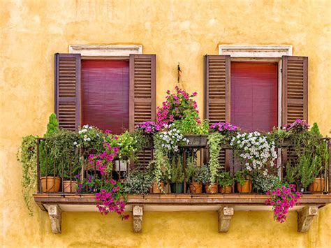fiori da balcone primavera estate fiori da balcone perenni donna moderna