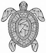 Turtle Animals Coloring Incredible Pages Adults Justcolor sketch template