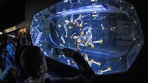 Mandataire Auto Boulogne Sur Mer : nausica le plus grand aquarium d 39 europe ~ Medecine-chirurgie-esthetiques.com Avis de Voitures
