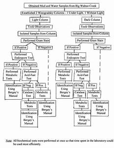 Unknown Bacteria Flow Chart Humphryrangel 39 S Blog