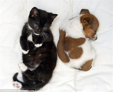 puppy  kitten  friends  funcage