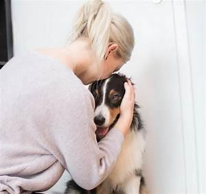 Wie kann ich meinem hund die angst nehmen