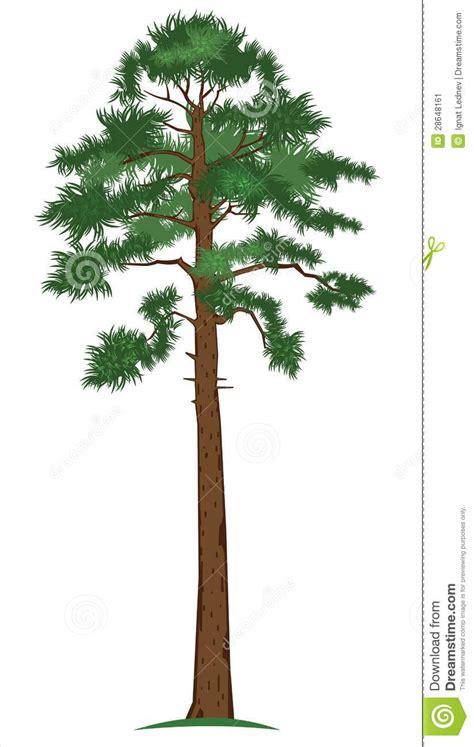 vector pine tree stock image image