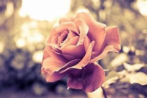 cute, flowers, pink, vintage - image #500578 on Favim.com