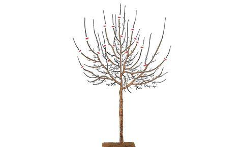 birnbaum schneiden birnbaum schneiden im winter bringt