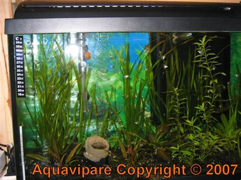 quel poisson choisir pour un petit aquarium quel taille d aquarium pour un combattant d coration aquarium pour poisson combattant poissons
