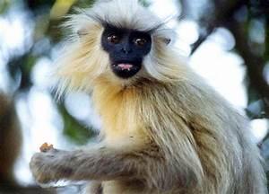 Endangered Species in India | Top 6 Endangered Species