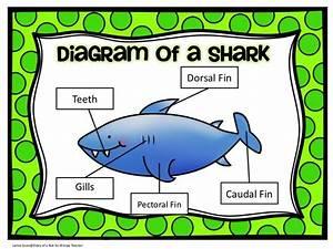 25 Best Sharks Images On Pinterest