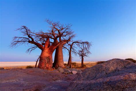 botswana tours plumtree toursplumtree tours