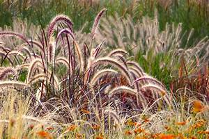 Hortensien Kombinieren Mit Anderen Pflanzen : pampasgras kombinieren welche pflanznachbarn bieten sich an ~ Eleganceandgraceweddings.com Haus und Dekorationen