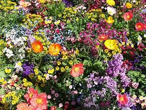 Bilder Blumen Kostenlos Downloaden : bunte blumen hintergrundbild kostenlos blumen ~ Frokenaadalensverden.com Haus und Dekorationen
