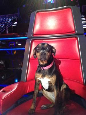 blake shelton dog miranda lambert and blake shelton s dog betty gt gt http