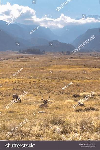 Mountain Rocky Mountains Valley National Elk Grazing
