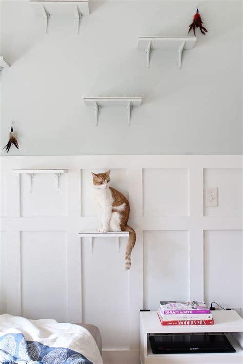 building  perfect diy pet oasis   cats cat