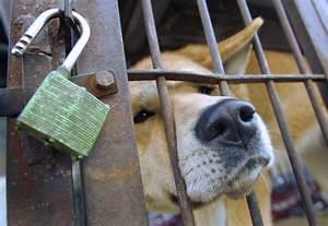 Dog Meat Market Photos