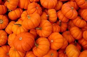 Halloween Activities for Kids Great Pumpkin Fest CA