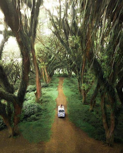 Selain menjadi tempat wisata keluarga, wisata hutan pinus precet kerap dijadikan sebagai tempat untuk acara kemah sekolah dan gathering. Hutan Djawatan Banyuwangi yang Penuh Aura Magis di Alam Fantasi