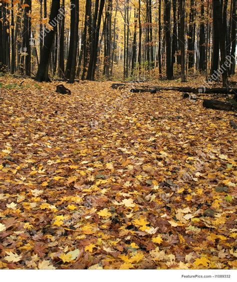 floor plans creator fall forest floor stock picture i1089332 at featurepics