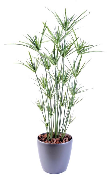 plante artificielle papyrus ornemental plastique en pot int 233 rieur ext 233 rieur h 110cm vert