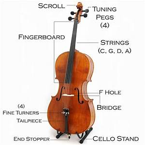 Parts Of A Cello Diagram