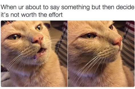 18 Times Cats Were Actually Relatable Af