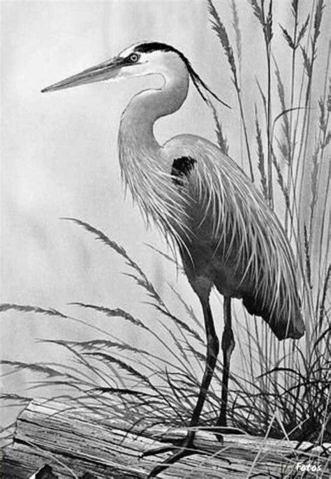 Coloring for adults - Kleuren voor volwassenen | Dibujo | Bird drawings, Bird art, Watercolor bird