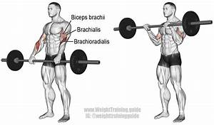 Barbell Reverse Curl Exercise Instructions And Video