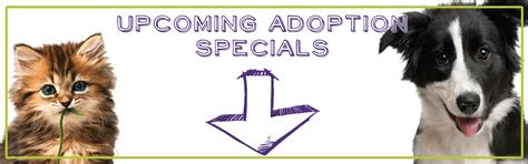 adopt  pet search adoptable pets