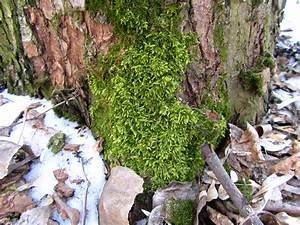 Moss Wallpapers  Pictures  Images