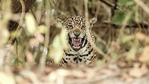Animal En G : canto de p jaros silvestres ii animales en video ~ Melissatoandfro.com Idées de Décoration