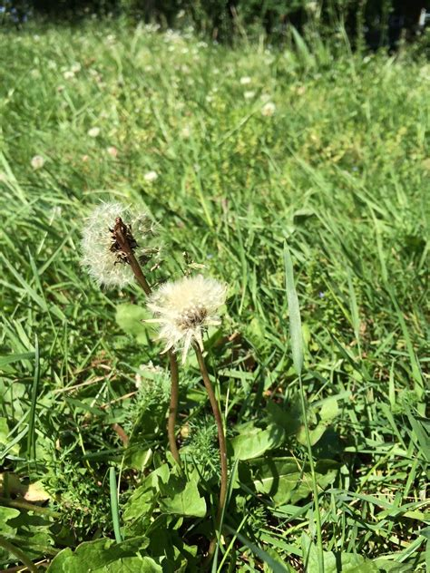 Wie Kann Ich Pilze Im Garten Entfernen by Pilze Im Rasen Was Tun Was Tun Gegen Pilze Im Rasen