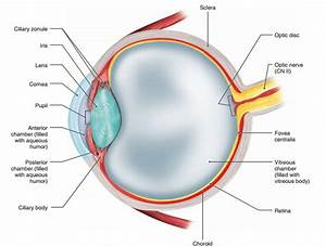 Three Main Accessory Eye Structures  Health Problem